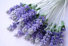 barreme lavender essential oil